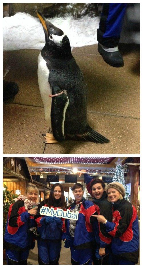 Penguins in Dubai
