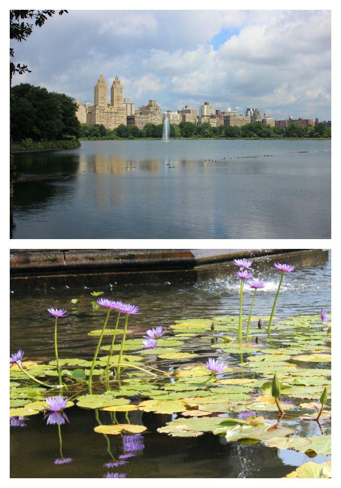 Central park ny vistas