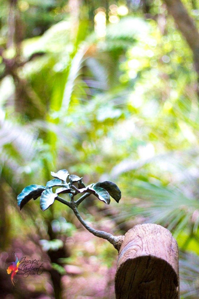 Jim Wheeler - Kauri Newl Post Regeneration Series