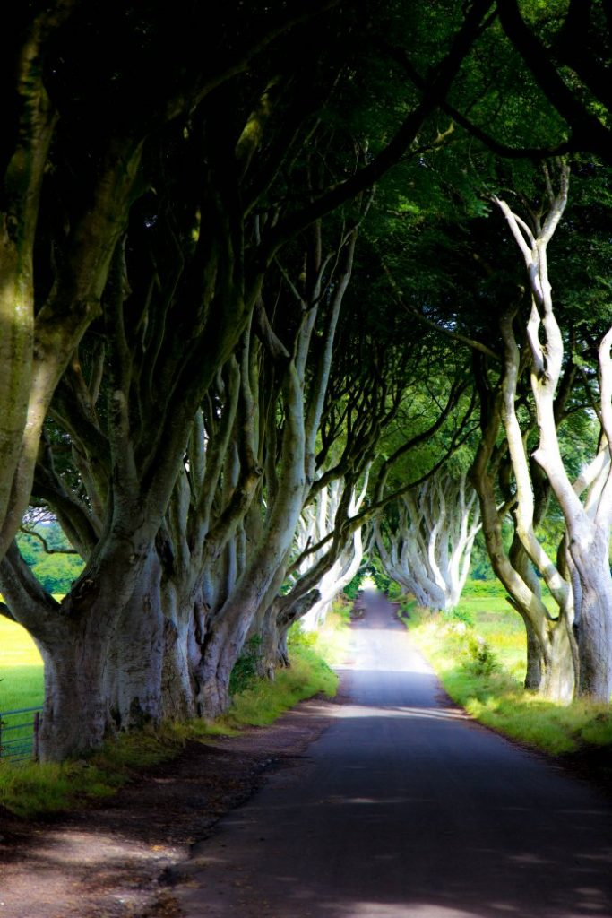 Visit the Dark Hedges in Northern Ireland