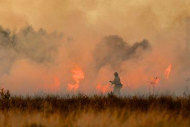 Australian bushfire crisis how you can help