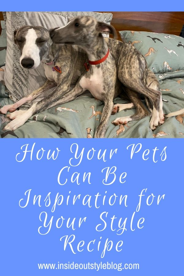How Your Pets Can Be Inspiration fHow Your Pets Can Be Inspiration for Your Style Recipeor Your Style Recipe